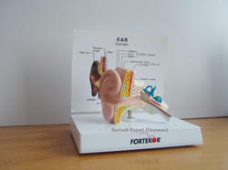 Anatomocal Models