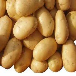 Yellow Round Fresh Potato, Packaging Type: Mesh Bag, Packaging Size: 10 Kg
