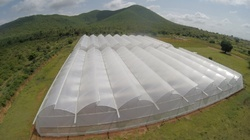 Ginegar Drip Lock G Cool Greenhouse Covering Film