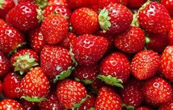 Strawberry Pulp, Speciality: Organic, Packaging Size: 50 Kg