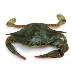 Frozen Sea Crab, For Restaurant And Household