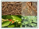 Ashwagandha / Withania Somnifera / Indian Ginseng/ Poision Gooseberry/ Winter Cherry Seeds