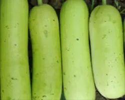 Chhotu Bottle Gourd