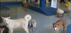 Dog Day Care