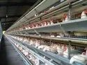 Fully Automatic Battery Cage