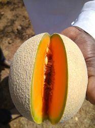 Muskmelon F1-Madhura Seed