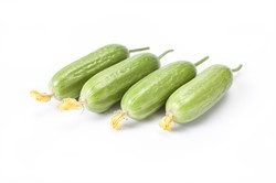 Rijkzwaan Packet Cucumber Hybrid Seeds, For Agriculture, Pack Size: 1000 Seeds/Pack