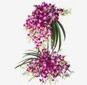 Purple Standing Star Flowers