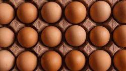 鸡啡蛋家用,转售,多与欧米茄