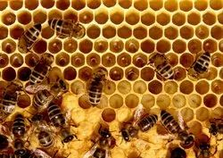 Honey Comb Removal Services