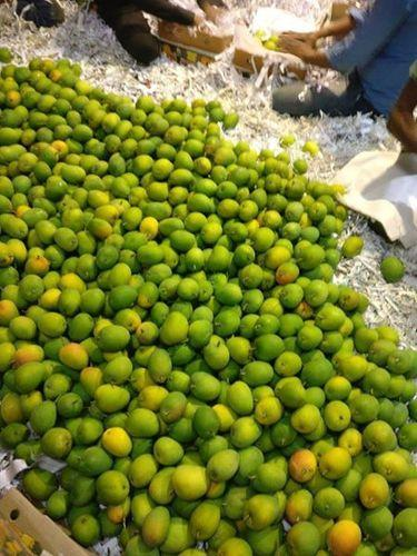 Mango Fresh With Irradiation treatment & Hot Water Treatment Apeda  Government Certified At FOB CIF