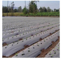 Agriculture Mulching