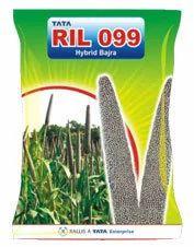 Hybrid Pearl Millet Bajra Ril 099