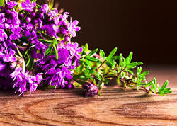 Red Thyme Oil