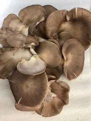 Pan India dry oyster mushroom, Packaging Type: Carton