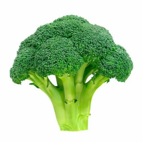 Fresh Broccoli, ब्रोकली, ब्रोकोली - Resource Foyer, Hyderabad | ID:  16028116173