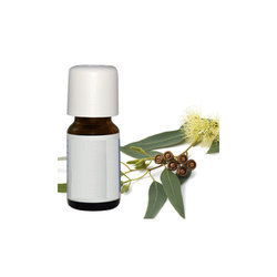 Eucalyptus Hydrosol  Oil