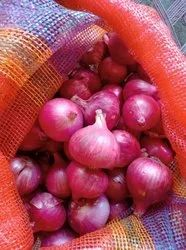 Best For 5 Months. Madhya Pradesh Onion, PP Bag, Packaging Size: 50 Kg