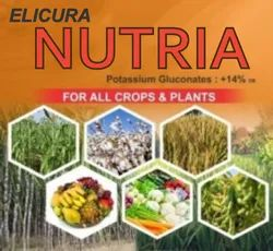 Elicura Nutria Organic Potash Fertilzer ( Gluconate Form ) for Fruit Enhancement On Crop