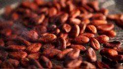Cocoa Brown Flavour