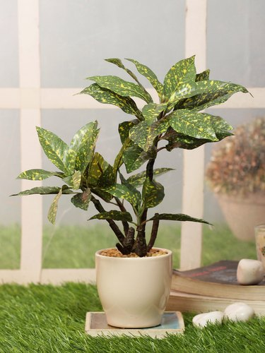 Artificial Green Croton Bonsai Plant With Ceramic Pot At Rs 1400 Piece Artificial Bonsai Plant Id 22188798612