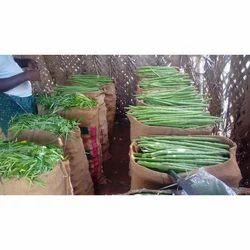 Fresh Drumstick Vegetable