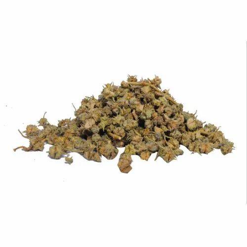Gokhru Seed, Packaging Type: Sack Bag