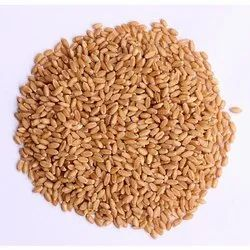 Wheat Grain, Packaging Size: 30, 50 Kg, Packaging Type: Pp Bag