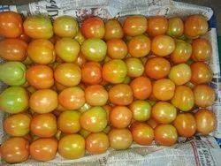 A Grade Green Tomato, Packaging Type: Carton, Packaging Size: 7 kg