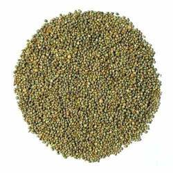 Hybrid Millet Seed