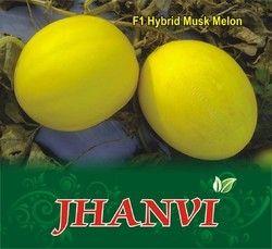 Jhanvi F-1 Hybrid Muskmelon Seed
