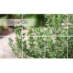 Organic Thyme Oil