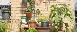 Natural Gardening Service, Coverage Area: 500-10000 Square Feet