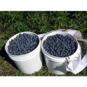 Seed Plastic Bucket