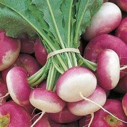 Fresh Turnip, Packaging Type: Leno Bag