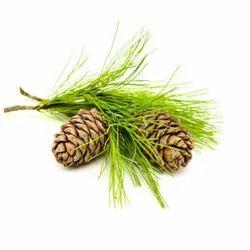 Cedar Yellow Extract