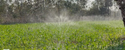 Rain Water Hose