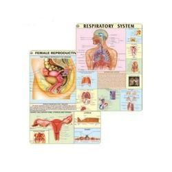 Midwifery & Child Health Nursing Charts