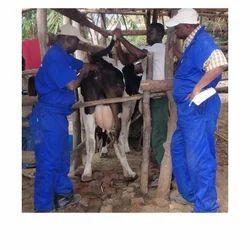 Veterinary Service