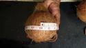 Mature Fresh Pollachi Coconut