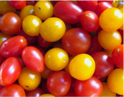 Cherry Red /Yellow Tomato