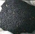 Satavari Seeds