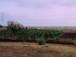 Contract Farming Service in India