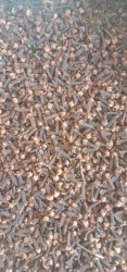Brown Whole Indian Cloves With Oil, Packaging Size: From 100 gm