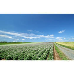 Agriculture Land Dealing Services