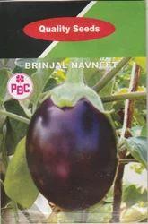 Brinjal Navneet Seeds