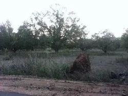 250 Acres Land sale Rs:4, 000, 00/- Per Acre Chittoor District , Spot Registration 100 % Clear Title