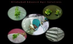 Training Of Students On Plant Biotechnology