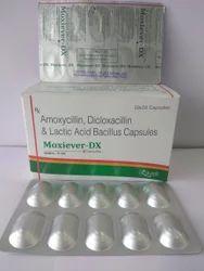 Amoxycillin Dicloxacillin Lactic Acid Bacillus