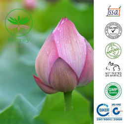 Pink Lotus Essential Oil